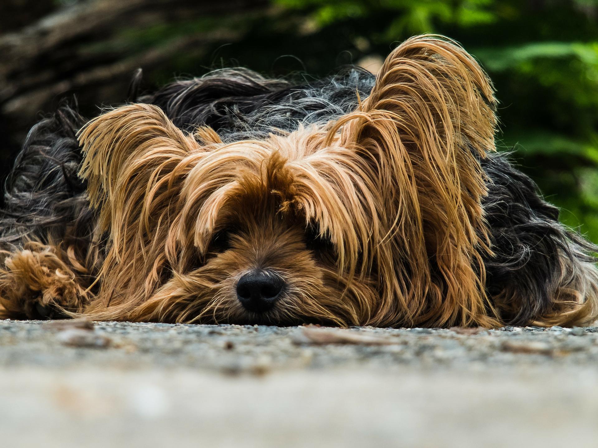 A Dogs Dinner – Fun Photos – What A Shot
