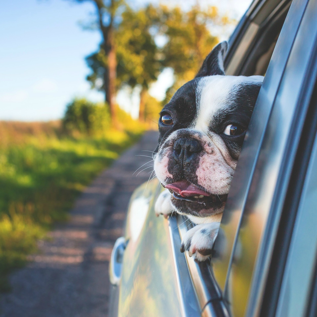 Travelling with dogs in Dogland – Travel Tips – Dogs and Car Travel