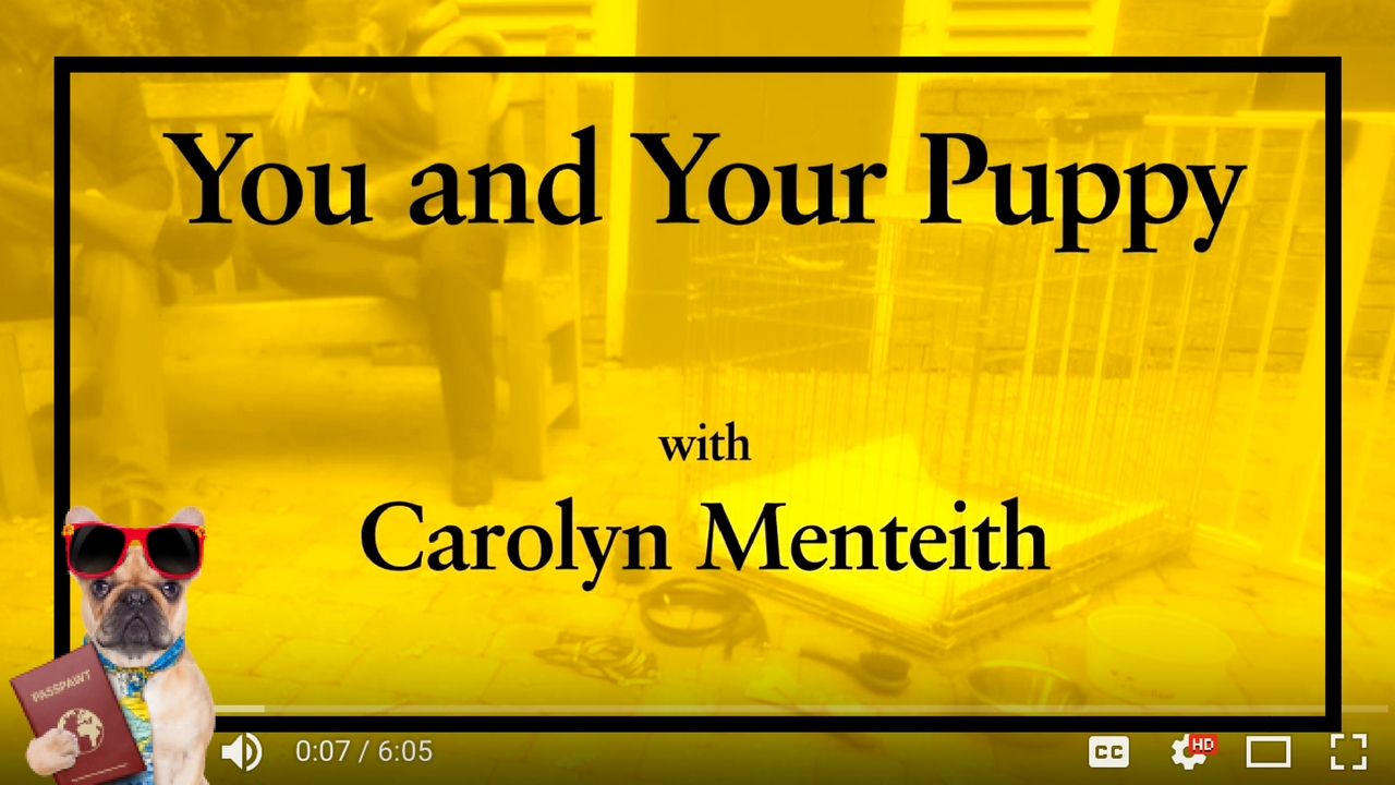 Dog Training Videos – Puppy Training – You And Your Puppy: First Homecoming – Part 2/11