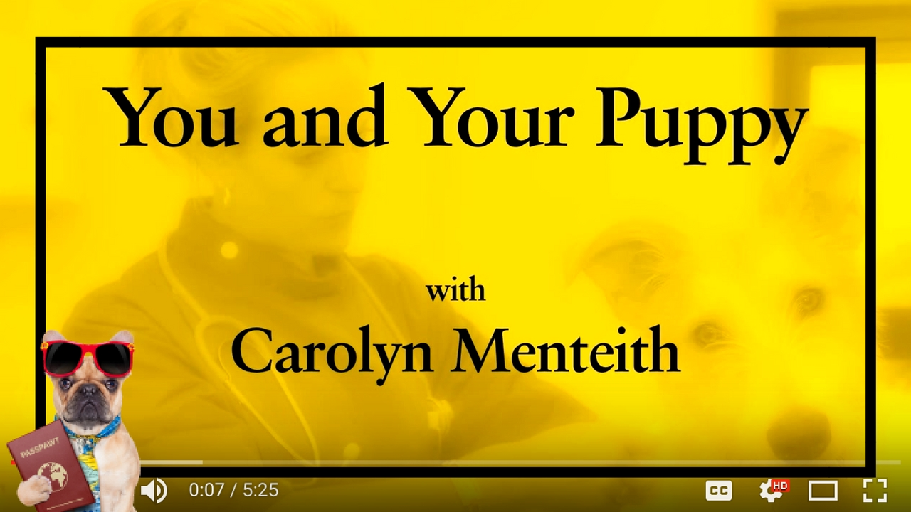 Dog Training Videos – Puppy Training – You And Your Puppy- First Vet Visit – Part 1