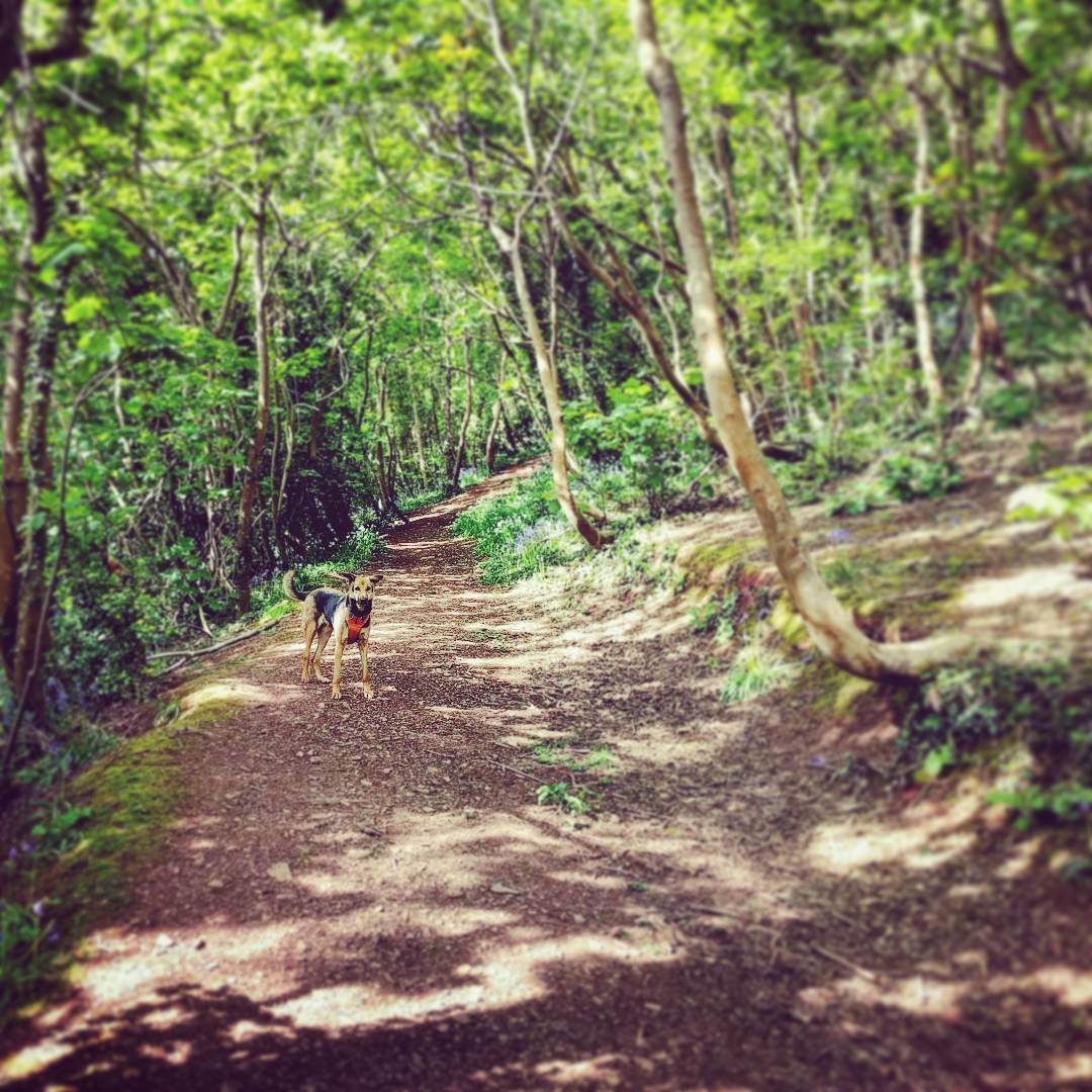 The 5 Best Dog Walks in Torquay: Dog friendly guide to Torquay