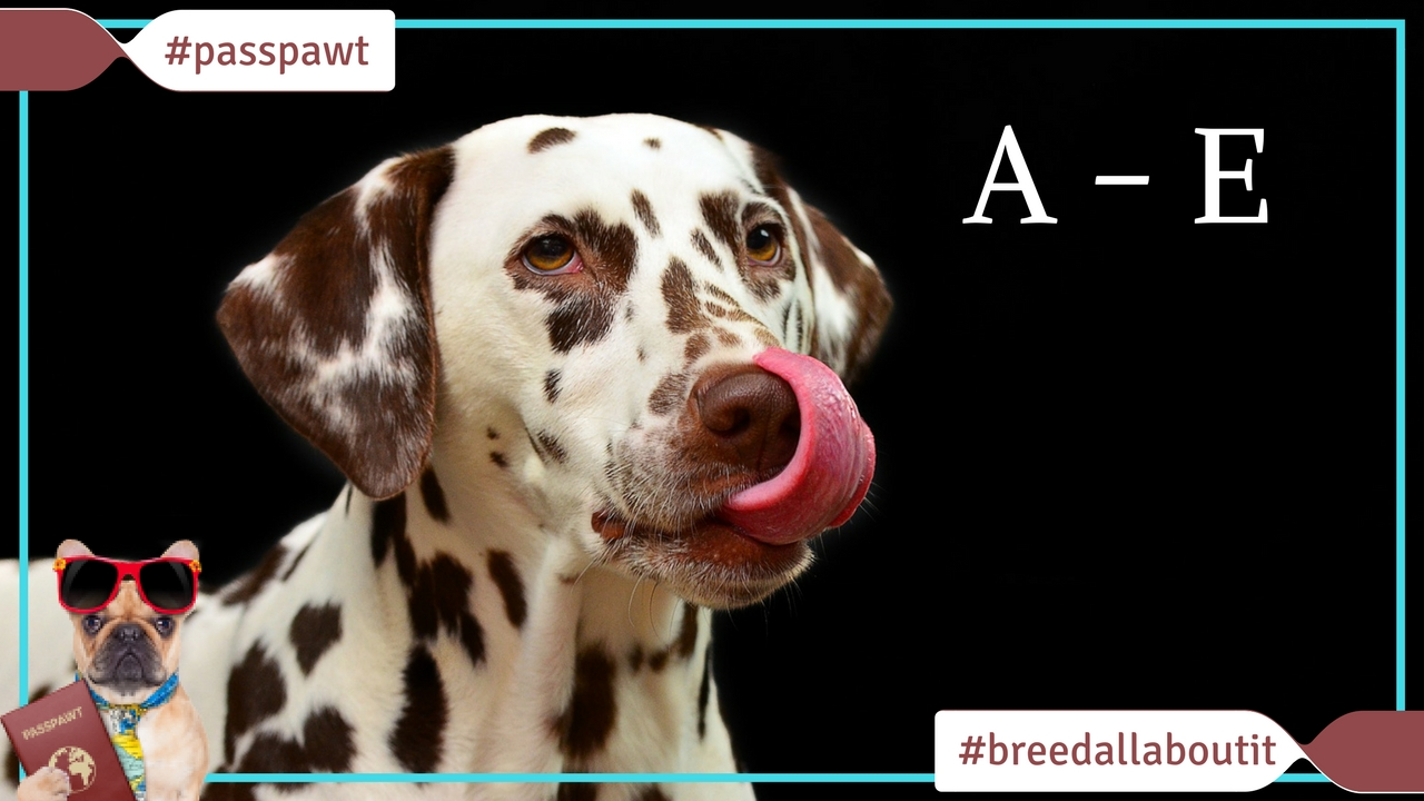 Breed All About It – Dog Breeds starting With A – E
