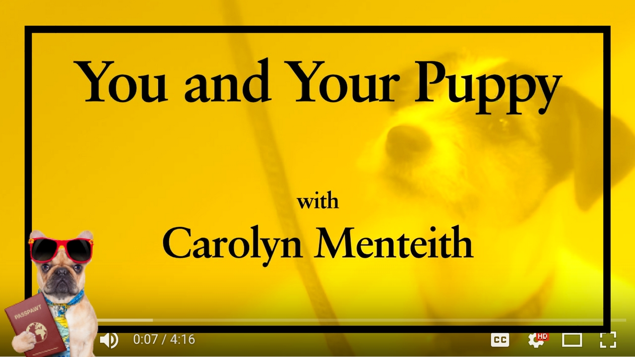 Dog Training Videos – Puppy Training – You And Your Puppy: Collar and Lead – Part 4/11