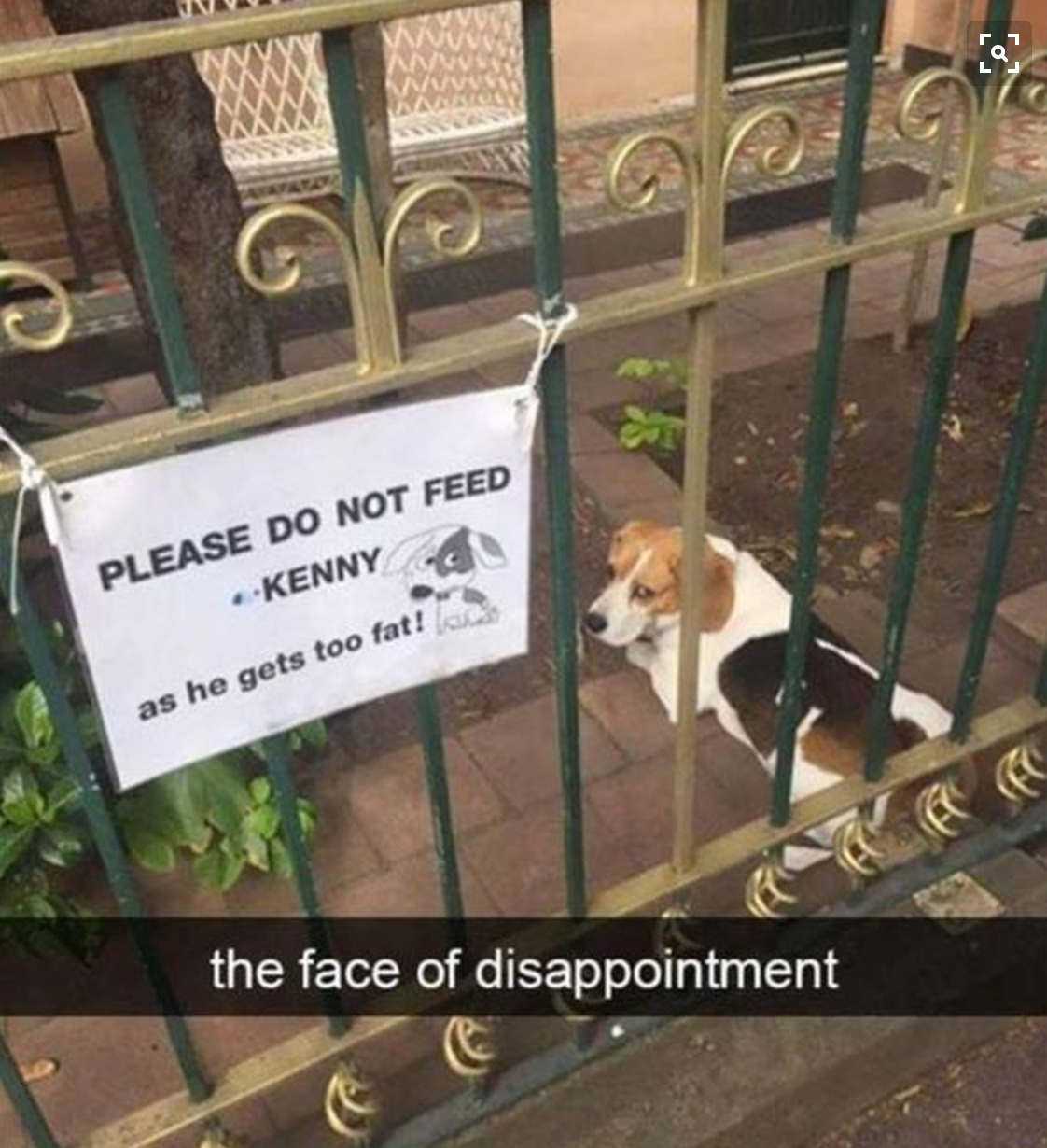 Dog Photo of the week –  – The Face Of Disappointment