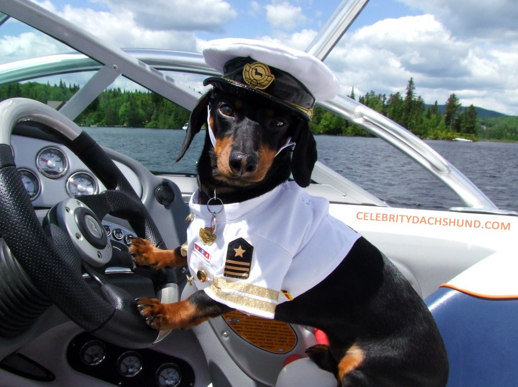 Top 9 Dog Friendly Cruises For Your Next Holiday