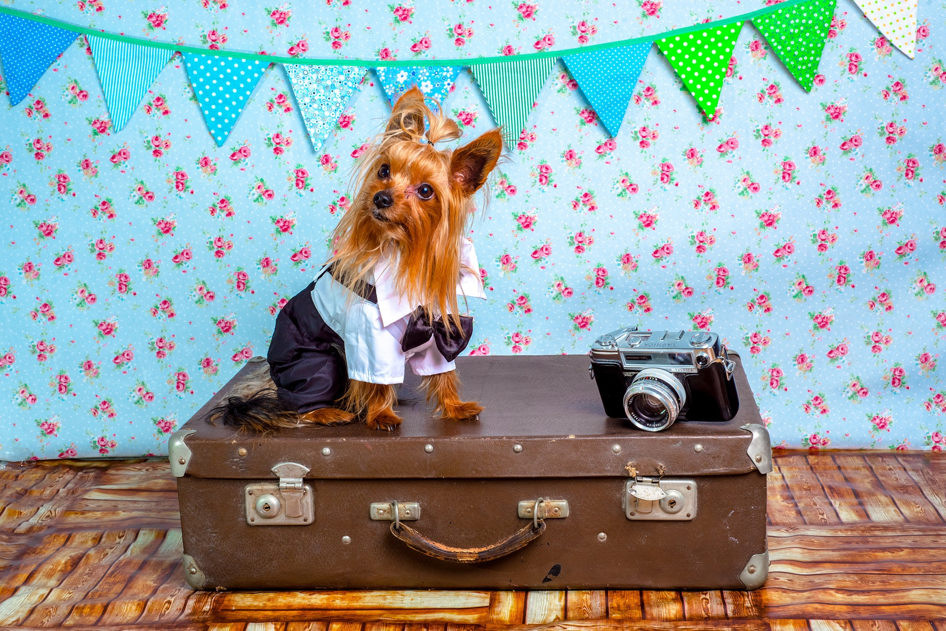 The Ultimate Dog Travel Packing List: Dogs Need a Checklist Too