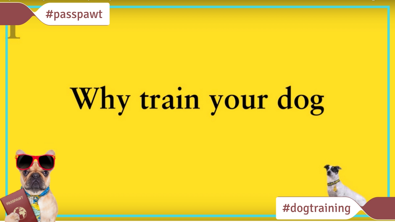 Dog Training Videos – Dog Training Videos – Dog Training Made Easy: Why Train?