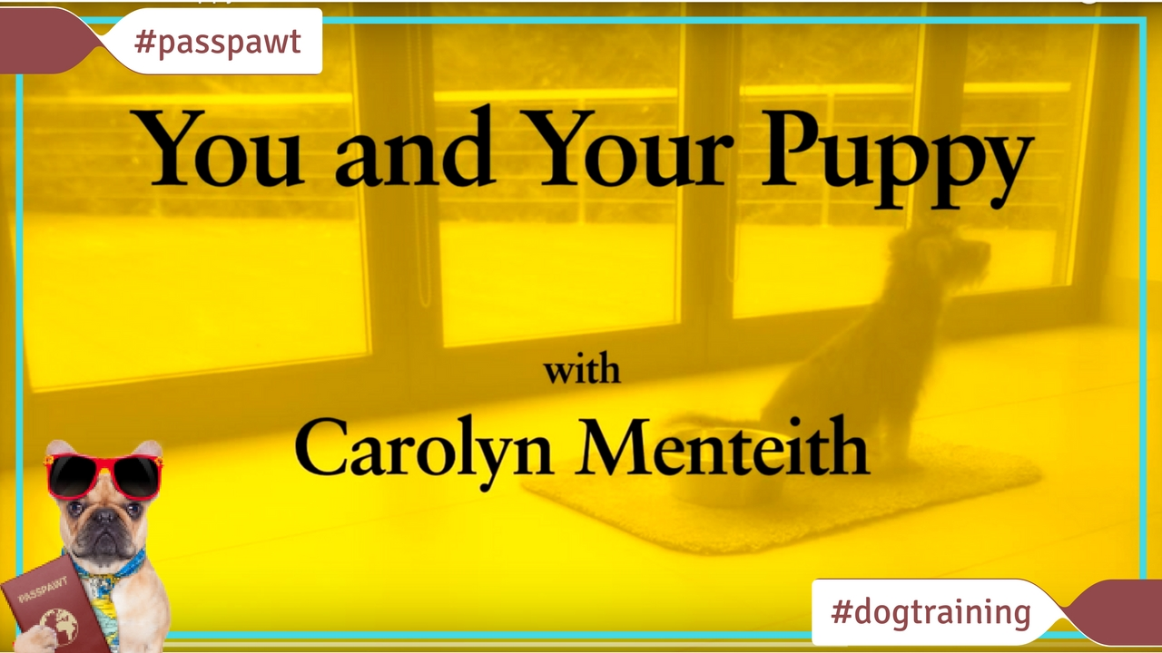 Dog Training Videos – Puppy Training – You And Your Puppy: Noise
