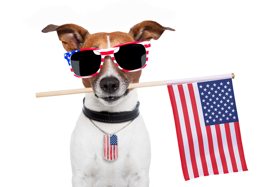 US Pet Passport Regulations – Traveling with Your Dog To The United States