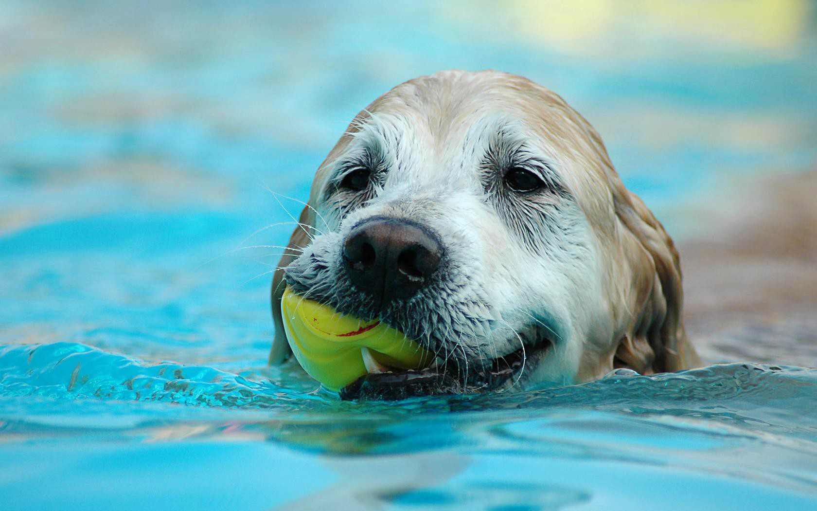 Swimming With Your Dog – Safety Tips For The Summer