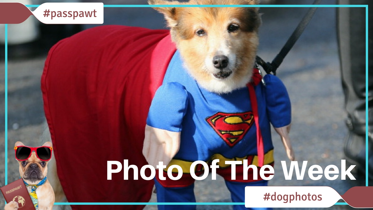 A Dogs Dinner – Fun Photos – Is It A Bird? Is It A Plane? No, It's Superdog