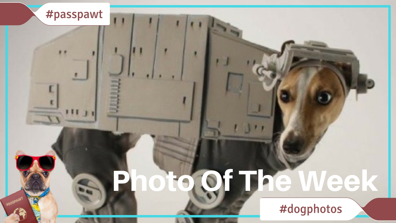 A Dogs Dinner – Fun Photos – May The 4th Be With You