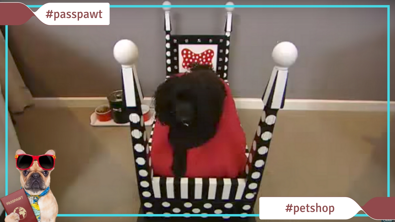 Dogs Pet Shop – Beds and Bedding – Make Your Own Dog 4 Poster Bed