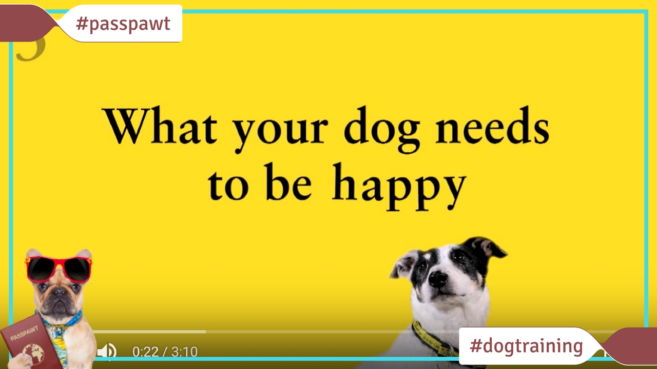Dog Training Videos –  – What your dog needs to be happy