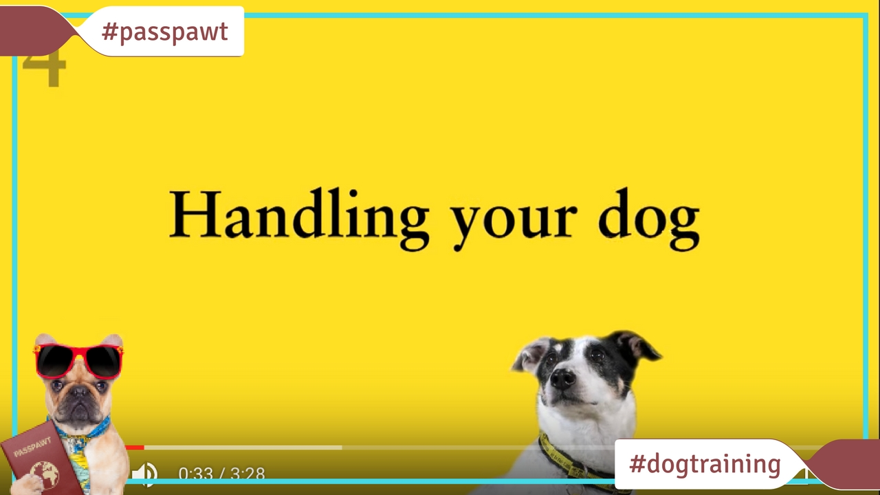 Dog Training Videos –  – Teach your dog to enjoy being handled