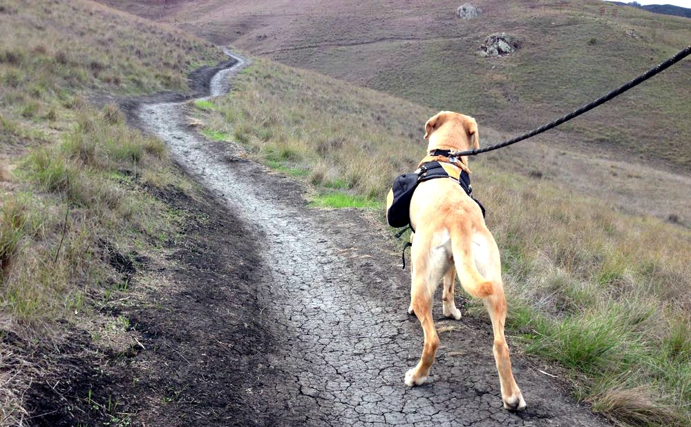 Hiking With Your Dog – 5 Unique Dog Hikes In Europe