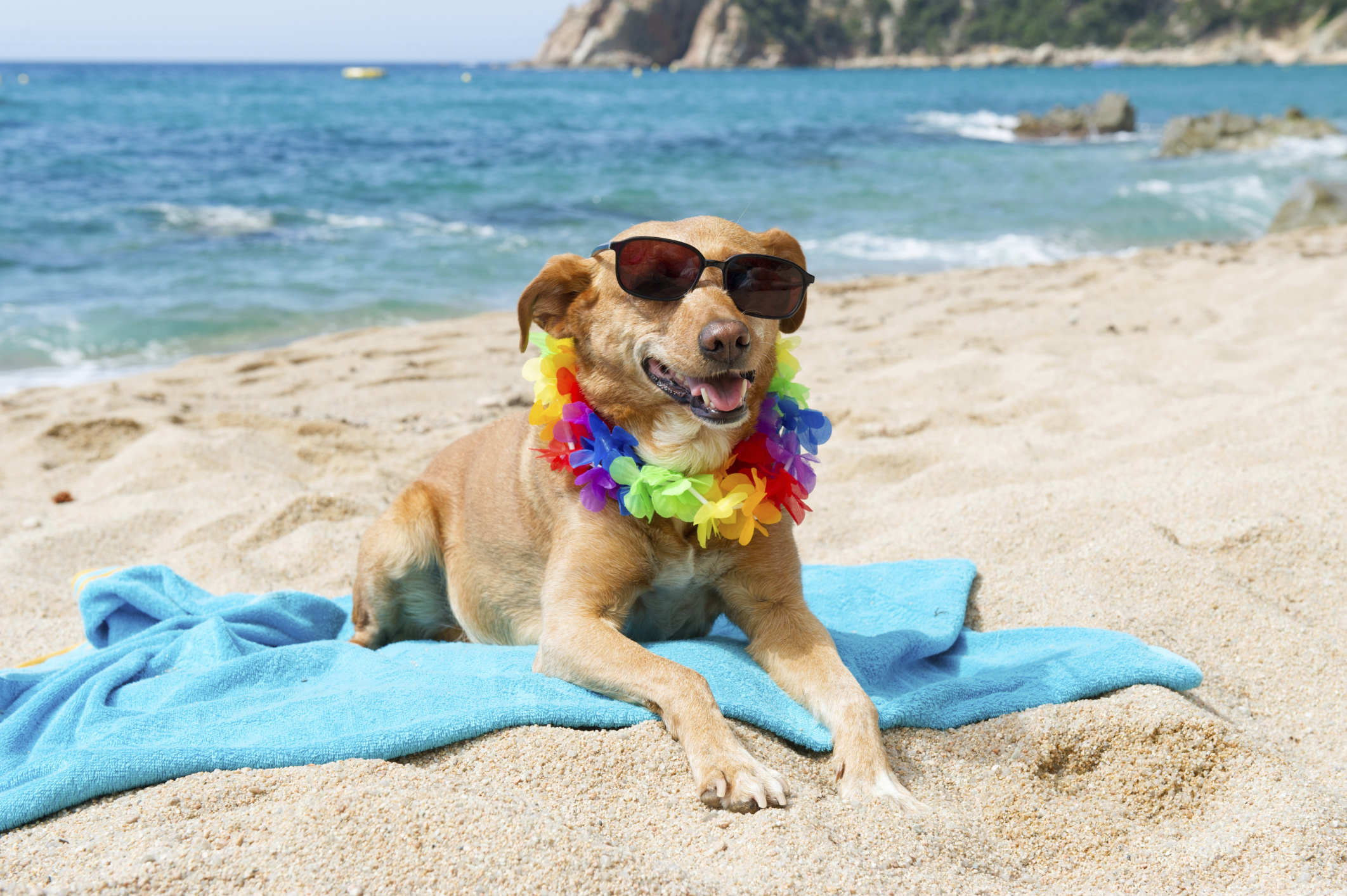 Taking Your Dog To The Beach – 6 Unique Dog Friendly Beaches in Europe
