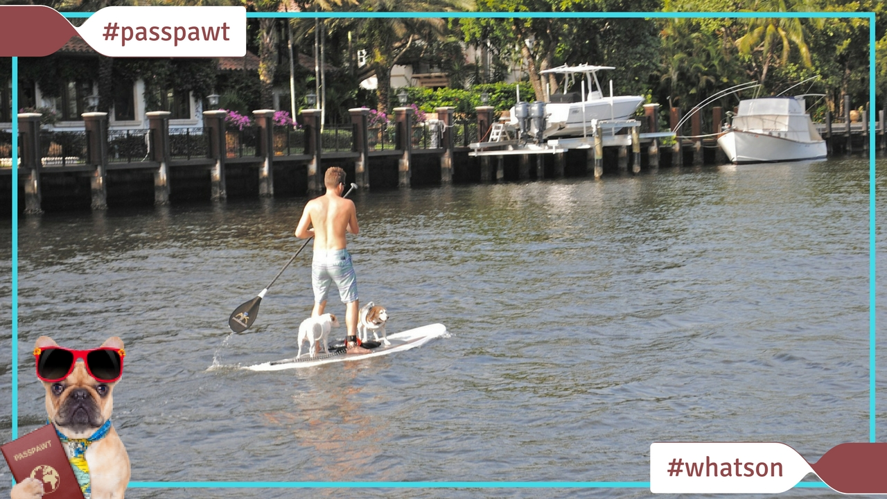 What's On In Dogland – News – Human & Dog Paddle Boarding on The Thames With City Paws Club