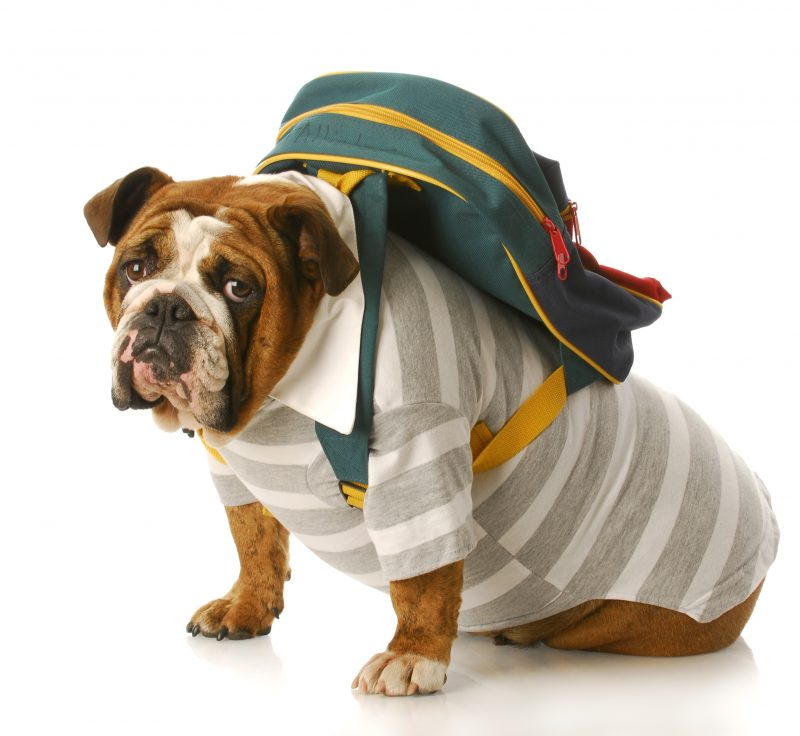 Dog Travel Clothes – 5 Stylish and Practical Travel Outfits for Dogs