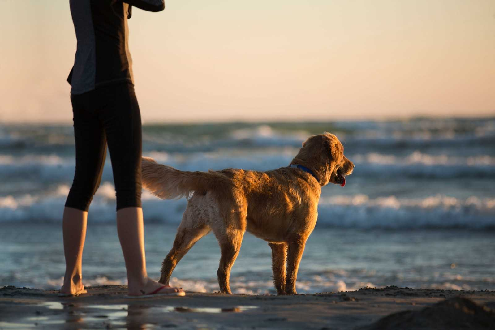 Pet and dog friendly cottages